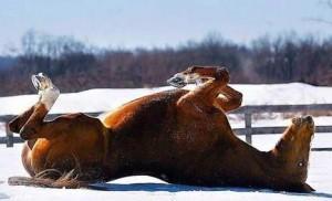 paard achterover